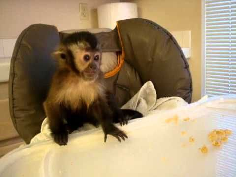 11 best a monkey story images on pinterest funny animal funny just a little snack fandeluxe Gallery