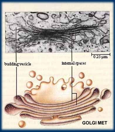 Microscopio electrónico de transmisión