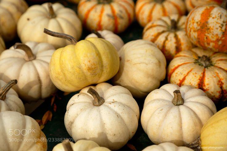 Circleville Pumpkin Show (Paul Sager / Chicago / USA) #Canon EOS 5D Mark III #food #photo #delicious