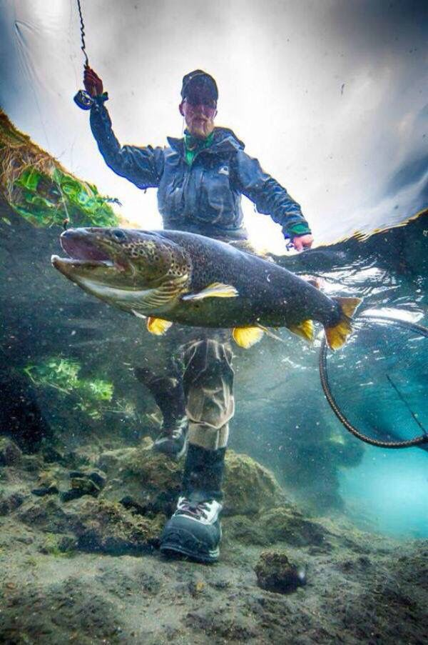 194 best images about fishing life on pinterest for Best trout fishing near me