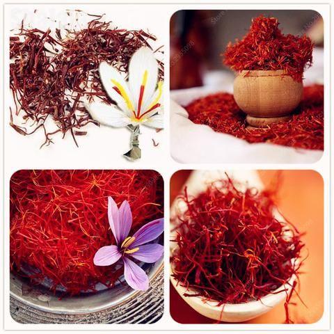80 Pcs Rare Saffron Seeds Medicinal Crocus Sementes Perennial Bonsai Flower Plants for Home & Garden Decor
