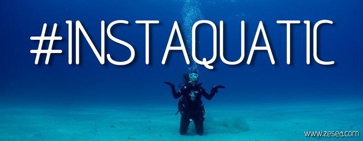 1 Photo, 1 histoire ! Avec les Instaquatic, je vous ferai partager en images quelques anecdotes et rencontres sous-marines.