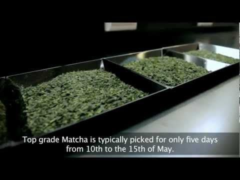 Bios Life Matcha: Chi-Oka Matcha Manufacturing Center - YouTube