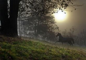 Horse & Moon