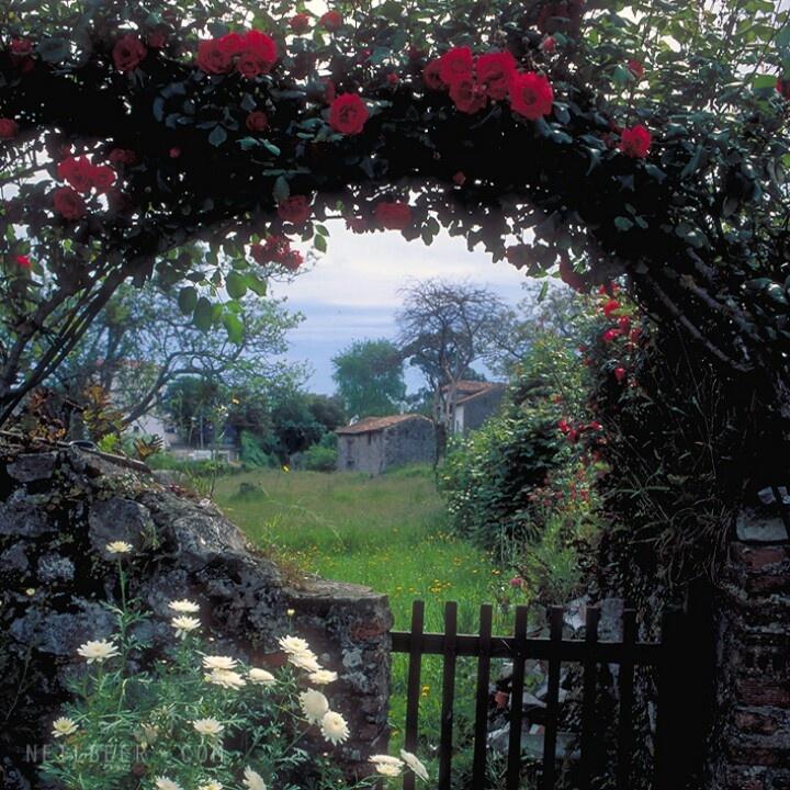 Spanish rose garden