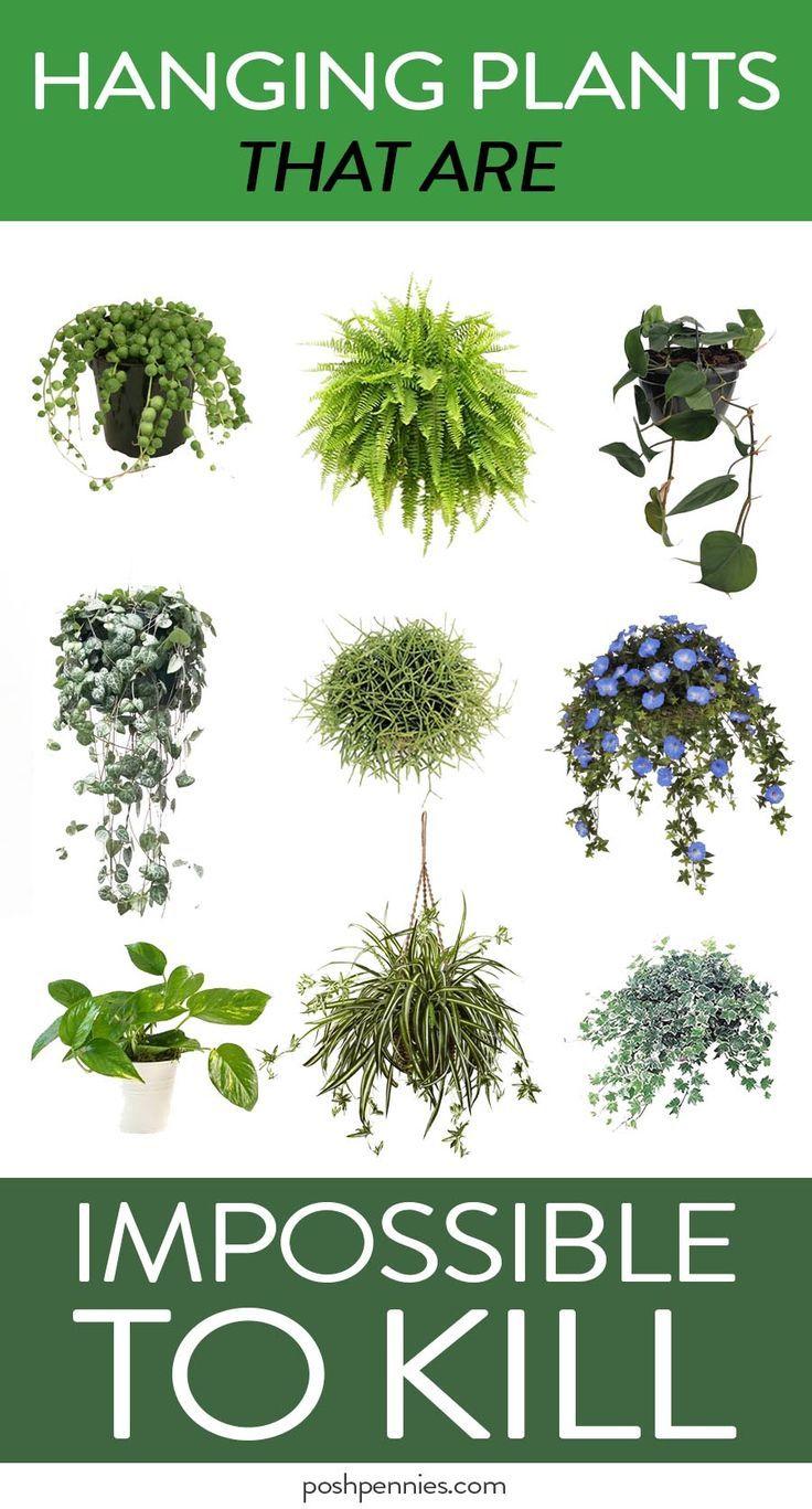 Indoor – Hängepflanzen, die Ihr Zuhause verblüffend aussehen lassen (und das können Sie nicht