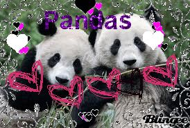 Giant Panda Facts And Information Funny Giff #2171 - Funny Panda Giffs| Funny Giffs| Panda Giffs