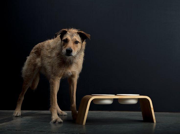 Modern Dog Feeder | Pine | Porcelain