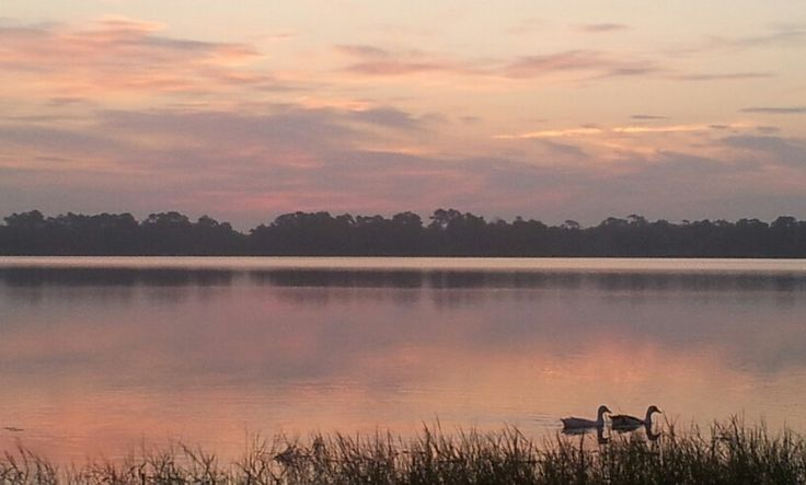 Morning swim on the lake