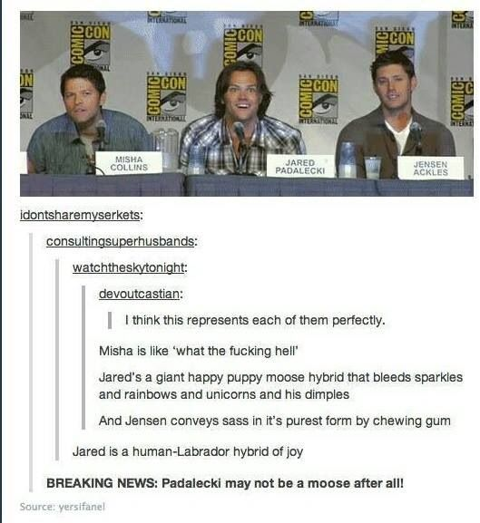 Mischa is like what the hell Jared is a giant happy puppy moose hybrid that bleeds sparkles and rainbows and unicorns and his dimples And Jensen conveys sass in it's purist form by chewing gum Supernatural actors comic con