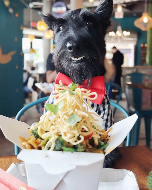 Raise Your Paw If You Like Noods About To Chow Down On This Veggie