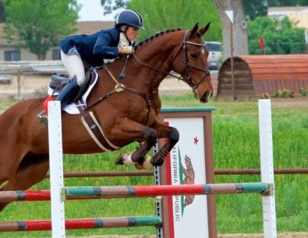 Great Bourton - Advanced Eventing horse for sale - 16.3 imported Zangersheide gelding