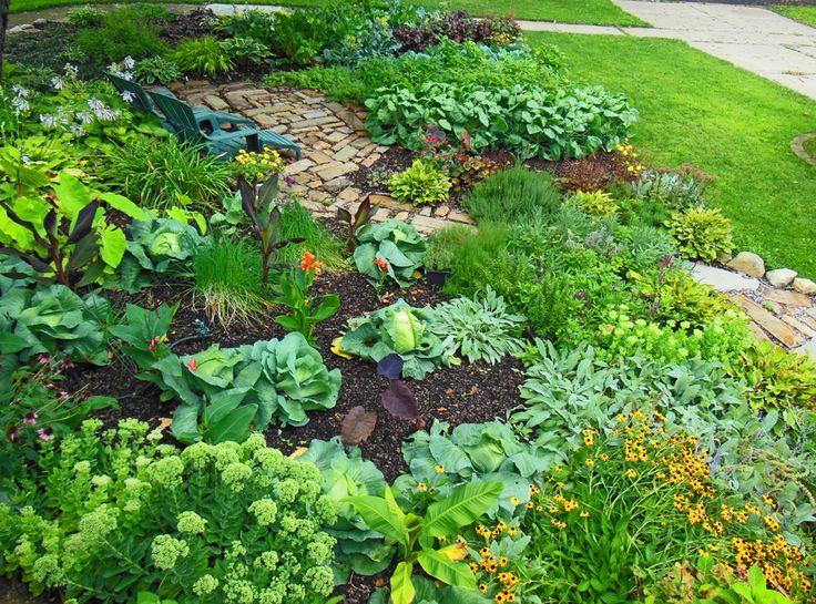 shawna coronados front lawn vegetable garden 2012 august - Garden Ideas 2012