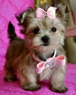Adorable...!!!