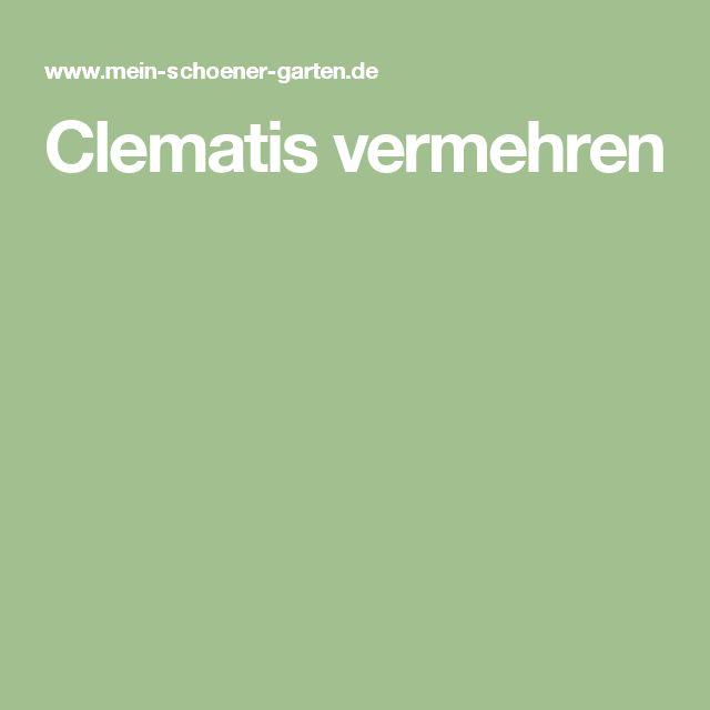 Clematis vermehren