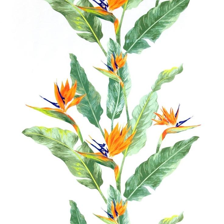 Strelitzia Grön Metervara