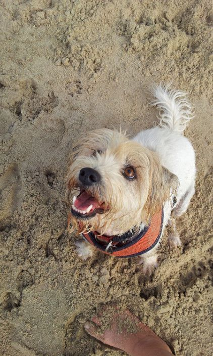 Trips to the beach are ALWAYS met with great enthusiasm! - Carol's Contented Critters, PetCare, Currumbin Waters, QLD, 4223 - TrueLocal