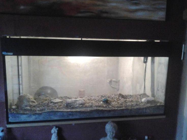 240l Aquarium mit Viel Zubehör zu verkaufen. Maße 1, 20x 0, 40x 0.59m (LxTxH)Filter Fluval404 , leicht defekt ( Verschleißteile), diverse Zubehörteile wie Futterautomat, Kiessauger, Schläuche,  Aquarium kies,.....!!!