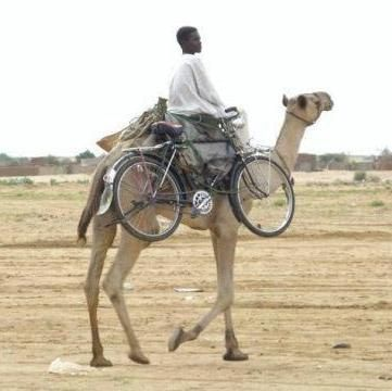 Apparently this camel didn't come with a hitch receiver. We regret that Softride racks are incompatible with this ship of the desert.