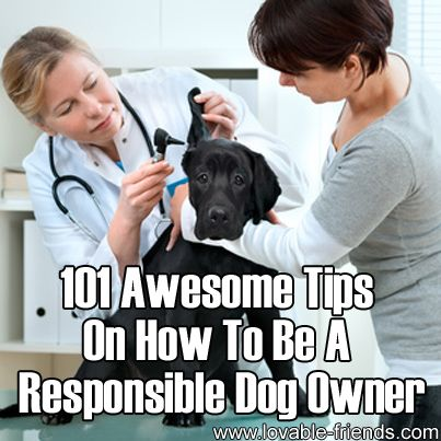Please Share This Page: Photo – © Alexander Raths – Fotolia.com We found a great page with 101 tips on responsible dog ownership. The link follows after our commentary. To keep a dog as a pet is one thing, but to be a responsible owner to a canine companion is another; and there's quite an …