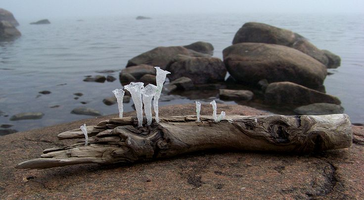 Tidegrowth No.1 / sculpture  driftwood and recycled plastic bags silver-crane.com