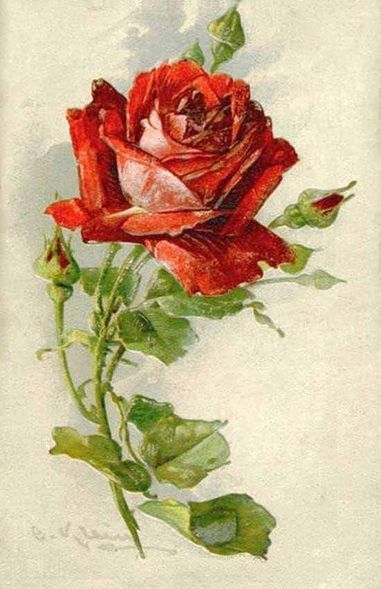 Розы живопись открытки, приколом про