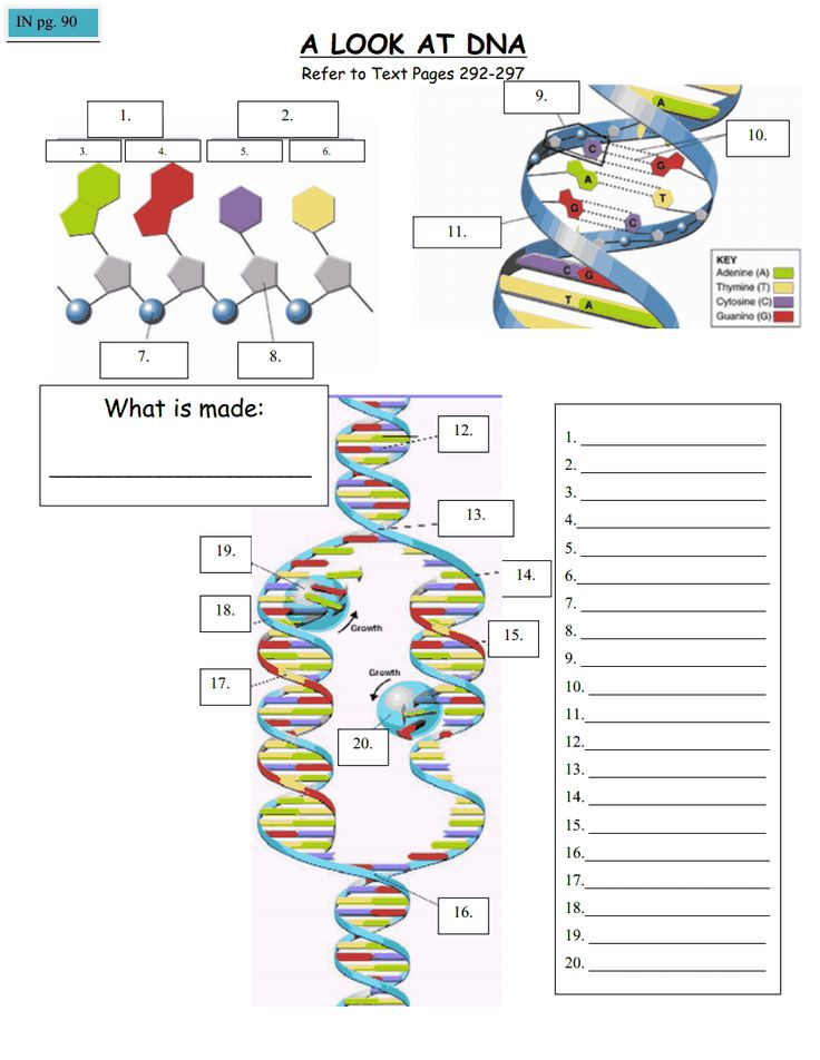 Dna structure worksheet middle school