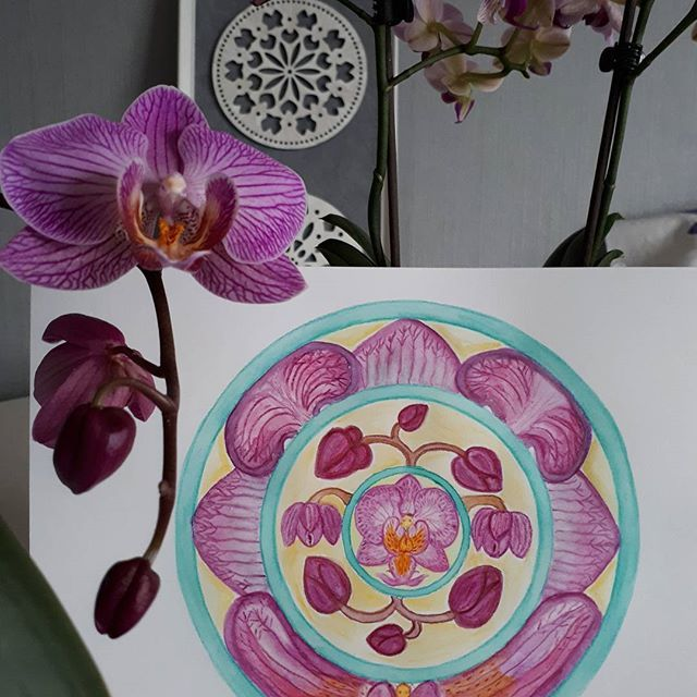 The orchid mandala painting made with aquarel pencils is finished!    #orchid #orchidflower #orchidee #mandala #mandalaart #aquarel #aquarelart #handmade #creative #painting #mandalaflower #droomcreaties