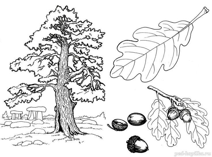 Раскраски по теме Деревья для детей. Распечатать бесплатно ...