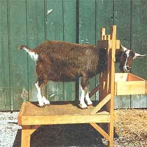 Plans for building a goat milking stand.