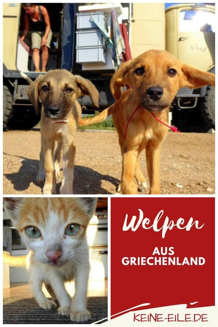 Wie Wir In Griechenland Drei Welpen Adoptieren Griechenland Hund Adoptieren Reisen