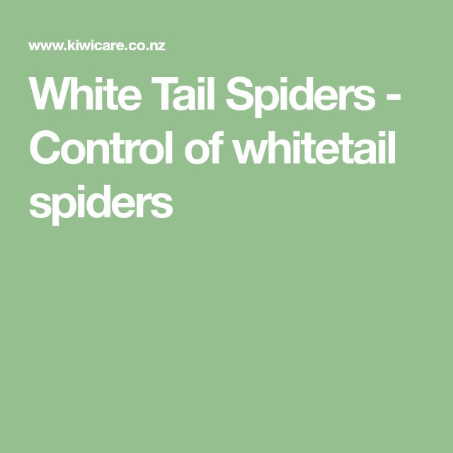 White Tail Spiders - Control of whitetail spiders