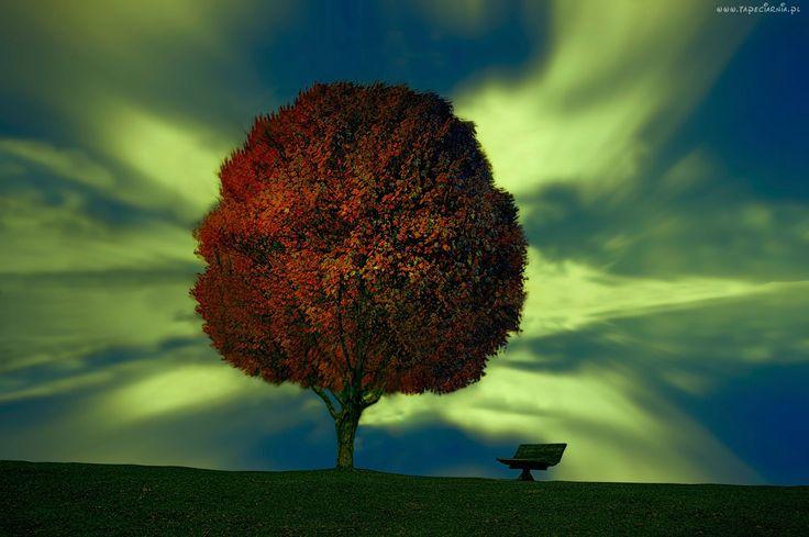 Zorza polarna, Drzewo, Ławka, Jesień