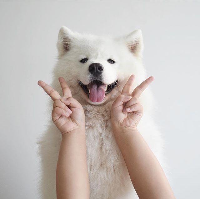 cute dog, tumblr, white, cute // pinterest and insta → siobhan_dolan