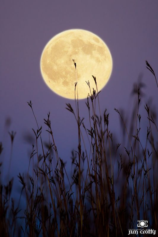Full Moon of October 2010 over tall grass prairie at Sugarcreek MetroPark