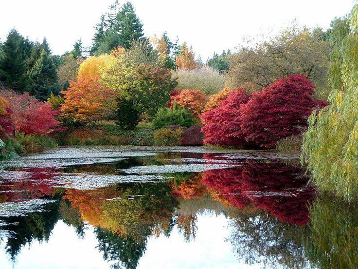 Vandeusen Botanical Garden, Vancouver, BC: Flowers Gardens, Botanical Gardens Jpg, Fall Leaves, Favorite Places, Autumn Leaves, Vandusen Botanical, Google Search, Autumn Colors, Autumn Colour