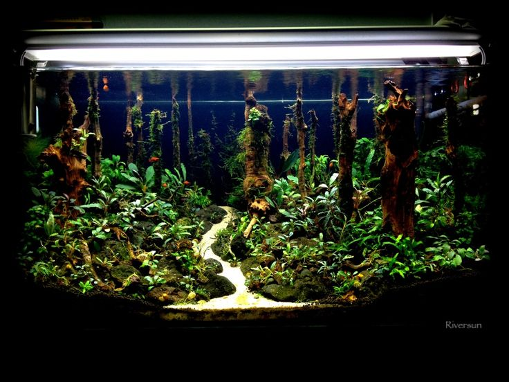 Forest - The Planted Tank.com Aquascaping Pinterest The Forest ...