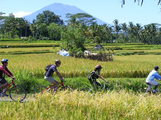 Bali Eco Cycling Explore Ubud by Bicycle Bali Kids Guide
