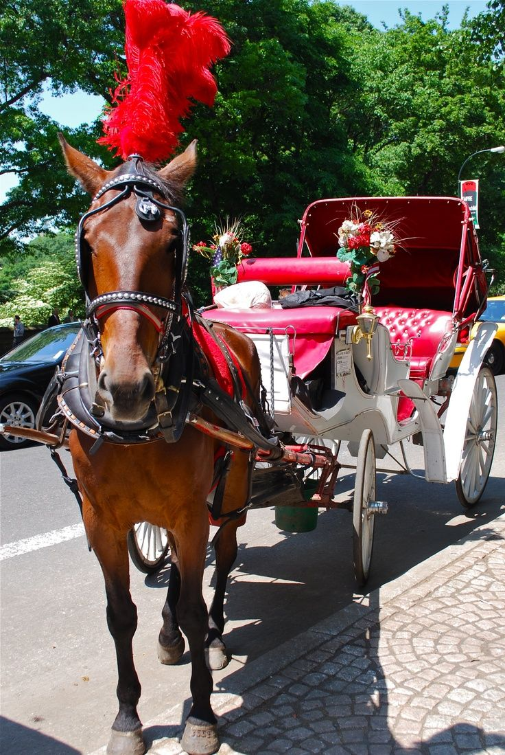 Drake And Simone Take A Romantic Carriage Ride Through Ny's Central Park  #deadsexy Excerpt