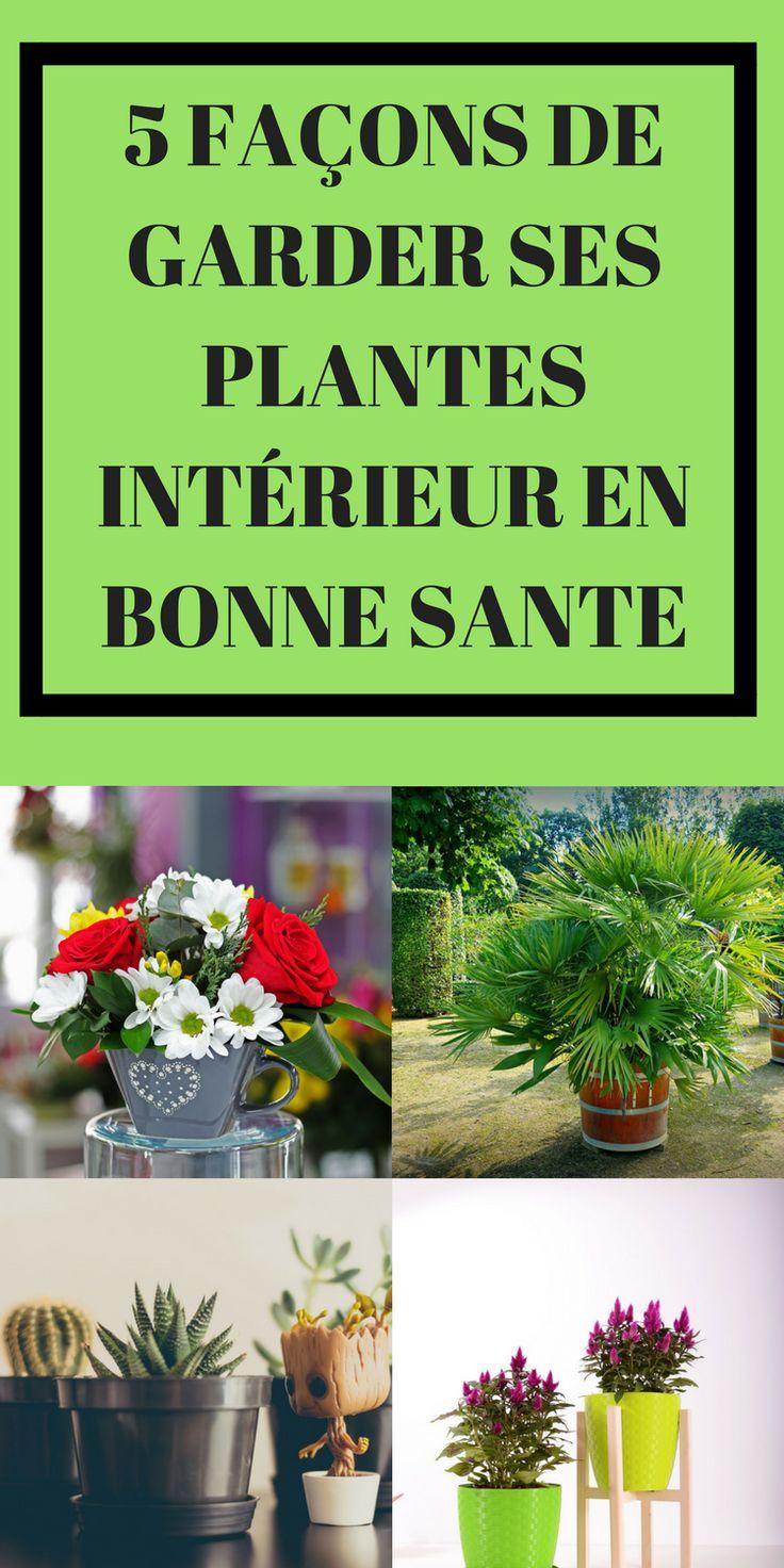 5 FAÇONS DE GARDER SES PLANTES INTÉRIEUR EN BONNE SANTE vous pouvez incorporer les soi-disant plantes d'intérieur dans votre maison ou appartement#jardin #jardinage #planter #maison #homedecor