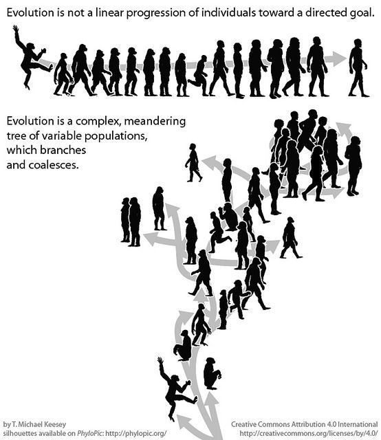 a history of the human evolution If human evolution is ongoing, what factors are influencing it, asks daniel lieberman in his new book.