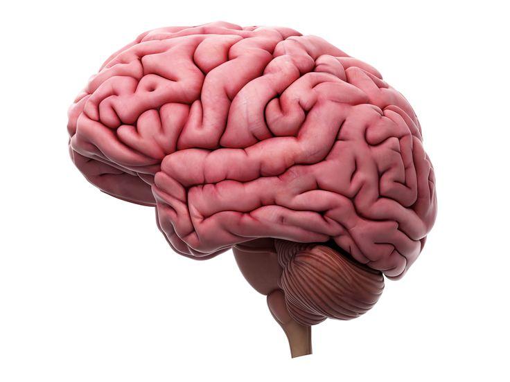 Hjernen din gjør deg til den du er - Aftenposten