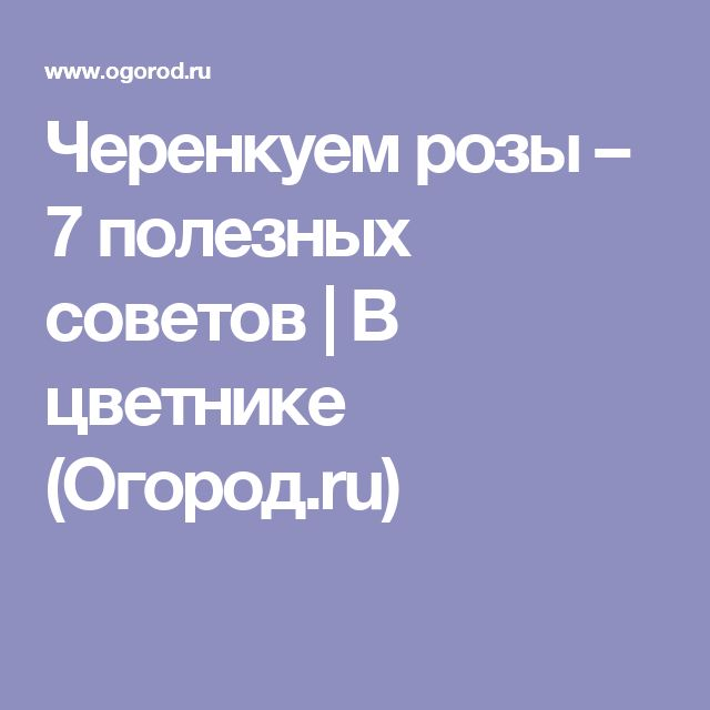 Черенкуем розы – 7 полезных советов | В цветнике (Огород.ru)