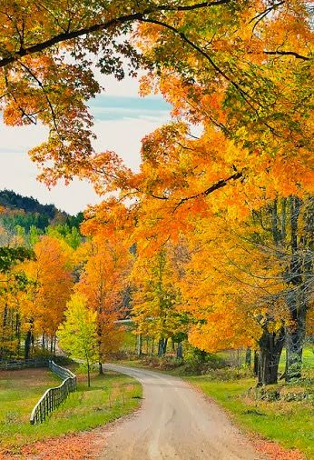 Backroad in autumn (no location given) by lilianajen56