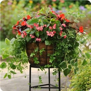 Shade Container.  This site has tons of container gardens, including plans.