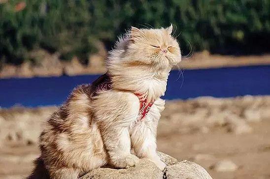 На работу??? Ну-ну!!! Счастливого пути!!! Первое правило кота:  Быть великолепным в любой ситуации.