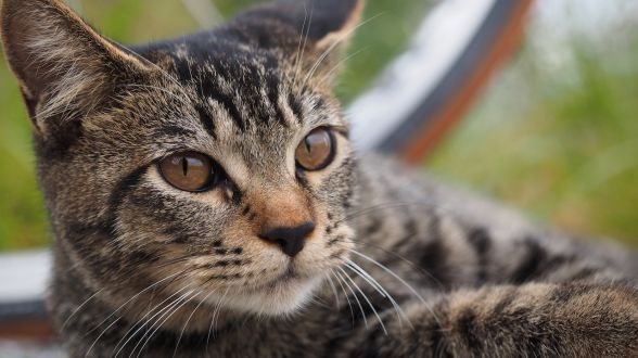 """【荻窪圭の""""這いつくばって猫に近づけ"""" ― 第327回 オリンパスの最新ミラーレス「OM-D E-M1」で撮る猫】"""
