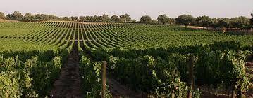 alentejo wines www.estadoliquido.pt