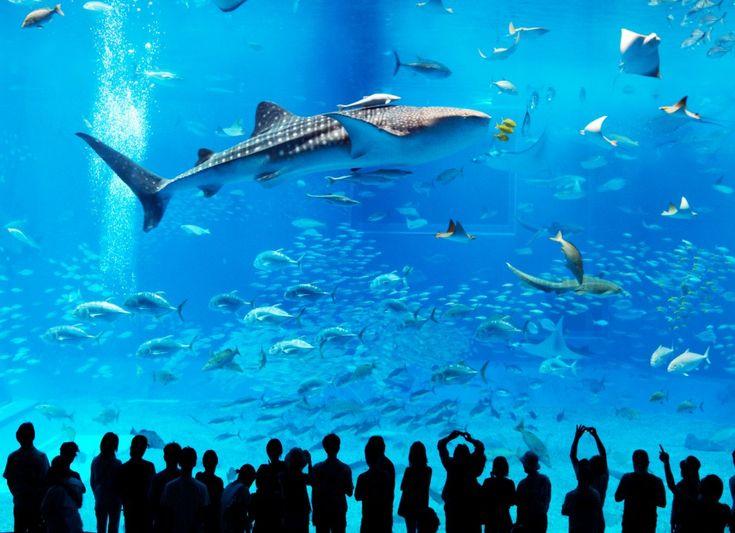 Le plus grand aquarium du monde Georgie, Atlanta  #aquarium #atlanta #family #ocean #fish #shark #place