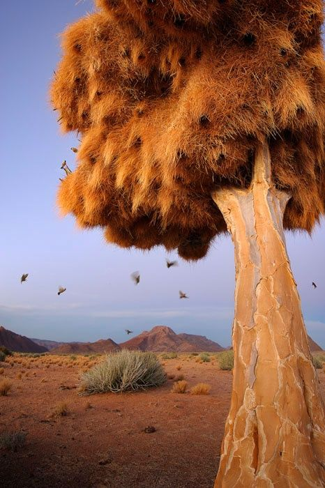 Nesting birds, Northern Cape, South Africa